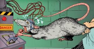 опыты над крысами